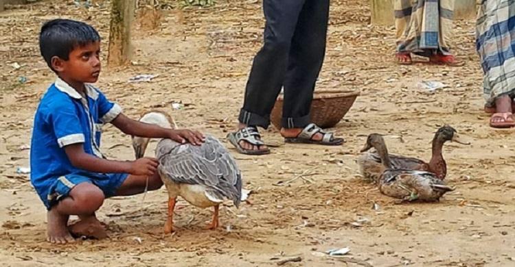 হাঁস বিক্রির টাকা দিয়ে ঈদের জামা কিনবে মাসুদ