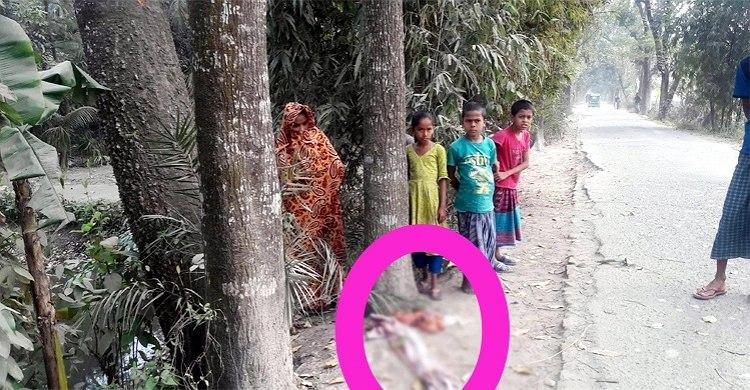 কমলনগরে ক্ষতবিক্ষত নবজাতককে কুকুরের টানাহেঁচড়া